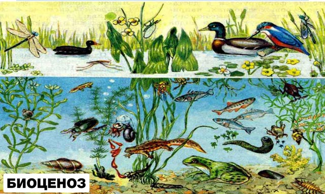 биоценоз водоема